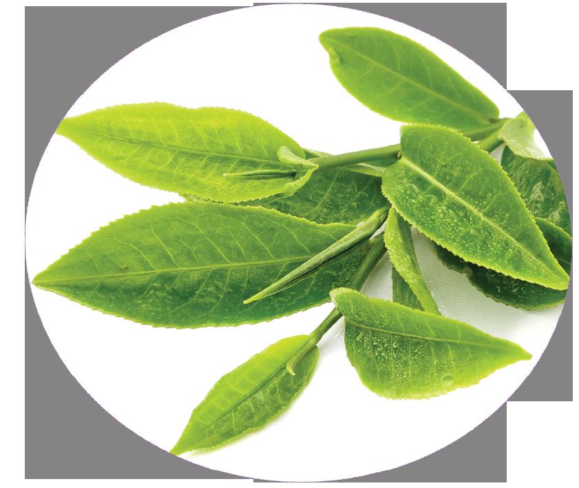 circel-green-tea