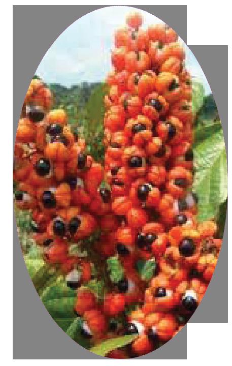 circel-guarana.png